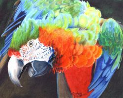 Beautiful Macaw by LindseyTaylor