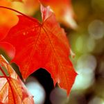 autumn moments.. by Preludium