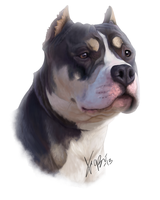 Pitbull Mix Portrait by RedEyedDemon