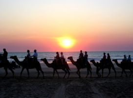 Cable Beach Camels by chameleon09