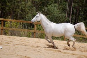 arab canter 4 by Chunga-Stock