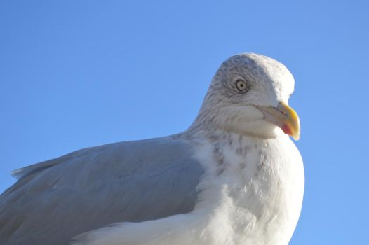 The Second Gull by Maxbart3