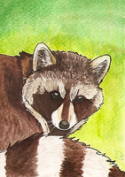 ACEO Trade - Coon for gothic-itachi by Domisea