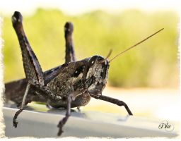 Mr. Grasshopper by DleeKirby