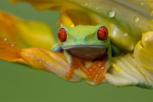 Spring frog by AngiWallace