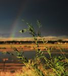 The Mesquite and the Rainbow by SharPhotography