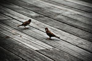 Birds and Planks. by FlamingSalad
