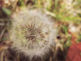 Autumn Dandelion by PaulTheGrand