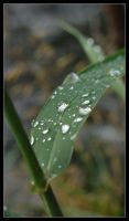 Late Summer Dew Drops by powowcow