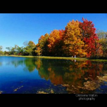fall colors  by Silverstarwolfie18