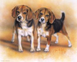 Beagles by DanMcManis