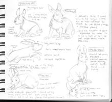 Watership Down char. designs by Kobb
