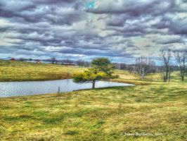 Tree By The Pond by jim88bro