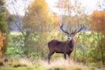 Stag 133-12-14 by Prince-Photography