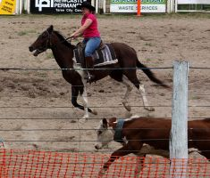 Stock - Horse Team Penning - 016 by aussiegal7