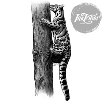 Inktober Day 14 Clouded Leopard Climbing a Tree by silvercrossfox