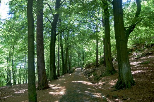 The lushy forest and the path by Maaackan
