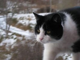 portrait of a cat by Charon1