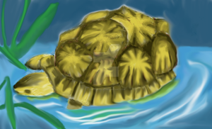 Turtle Color by Chaosaholic