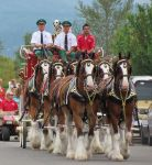 Budweiser Clydesdales by BountyHunterMacko