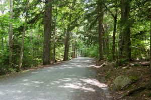 Forest Road (stock)13August 21, 2012 by RustedScrapMetal