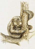 Tree sloth by Gabbygail