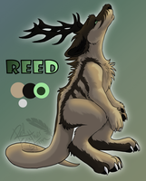 Reed by DrizzleSnow