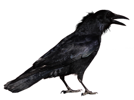 crow 1 by peroni68