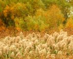 Shades of Autumn 2015, 6 by MadGardens