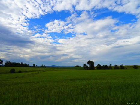 Grain and Sky by ermuel