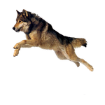 dog png by camelfobia