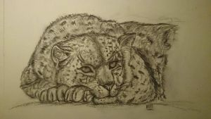 Leopard drawing charcoal by Riissie