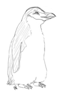 Chinstrap penguin by Alisha-town