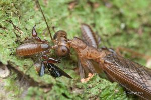 Pseudoscorpions by melvynyeo