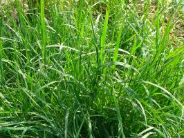 Grass Stock - 01 by VampireSybelle-Stock