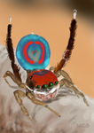 Peacock spider sketch by Marcelo-C-C-Filho
