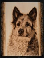 Scruffy - handcrafted woodburning by brandojones
