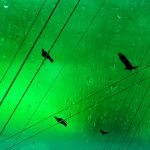 wired crows and green by EvaShoots