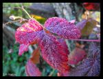 Frost into Dew by LetsAllBeNuerotic