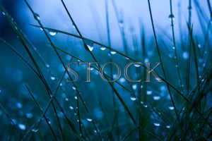 Water-drop-grass-1 by Evil-e33