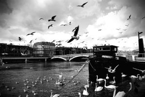 Les oiseaux by My-Life-Without-Hair