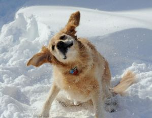 Let the Snow and Ears FLY.... by BlueSolitaire
