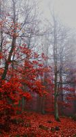 Burning leaves by Maddin-P