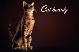Cat beauty by AliceNatalie