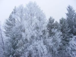 Frosty Trees by CX-17