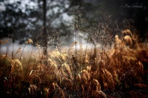Morning dew on heather. by Phototubby