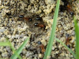 Ant Nest 007 - HB593200 by hb593200