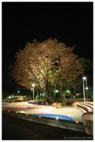 Old tree at Southbank by Bwen