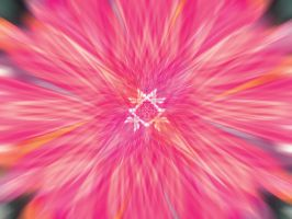 Pink Background by shadorma