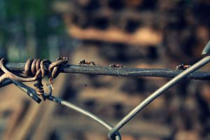 The ANT Colony by PerfectMistake1